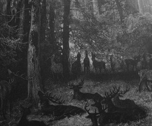 deer, forest, and dark image