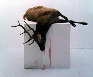 taxidermy image