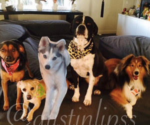 dogs, miley cyrus, and miley's dogs image