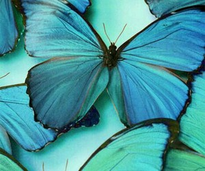 blue, bright, and butterflies image