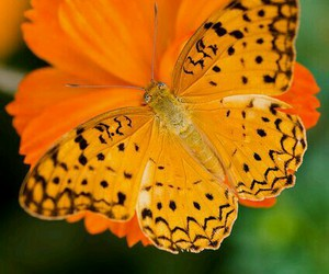 bright, flower, and butterfly image