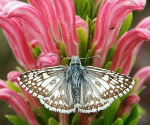 butterfly, garden, and pink image