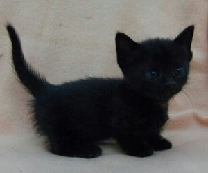 black, gatito, and little image
