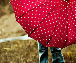 umbrella, red, and photography image