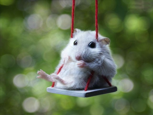hamster, swing, and sweet image