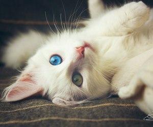 animal, green eyes, and heterochromia image