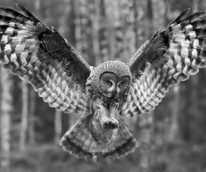 dark art, inspiration, and owls image