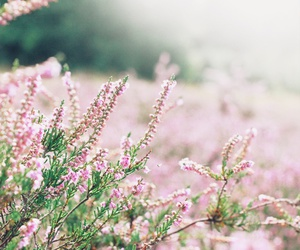 nature, flowers, and garden image