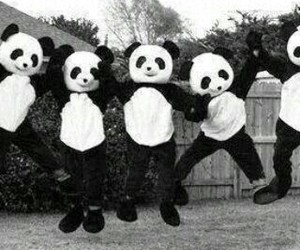 black, panda, and white image