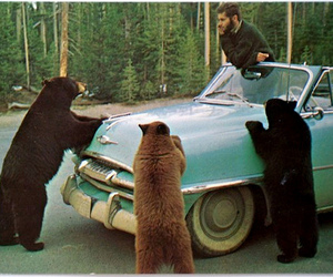 bear, car, and vintage image