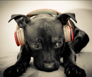 dog, music, and black image