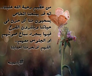 Image by Syrian Flower