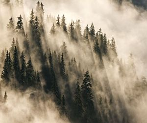 autumn, Dream, and fantasy image