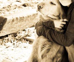 dog, girl, and hug image