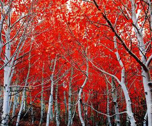 autumn, california, and skies image