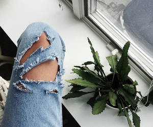 plants, grunge, and jeans image