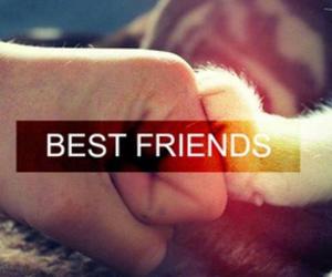 cat, best friends, and friends image