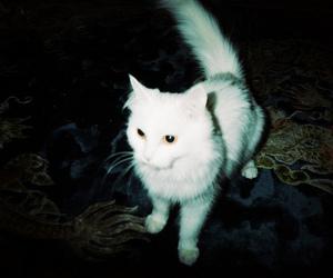 cat, grunge, and vintage image