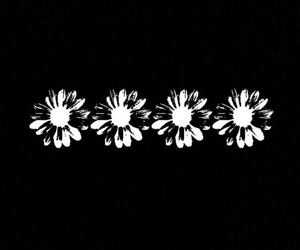 flowers, overlay, and black and white image