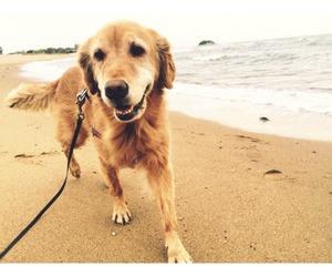 dog, animal, and adorable image