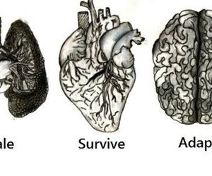 heart, brain, and feel image