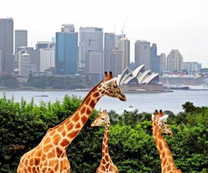 australia and Sydney image