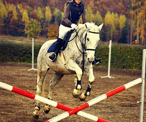 heart, horse, and jump image