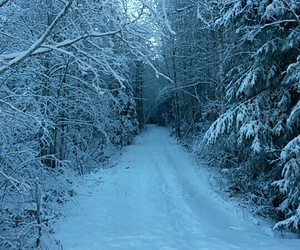 beautiful, pretty, and snow image