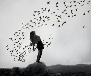 beuty, black and white, and birds image
