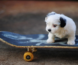puppy, skateboard, and ahw image
