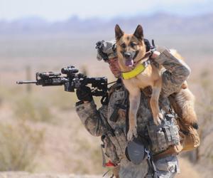 dog, german shepherd, and military image