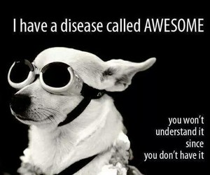 awesome, funny, and dog image