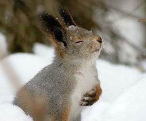 animal, snow, and squirrel image