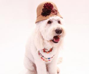 accessories, adorable, and dog image