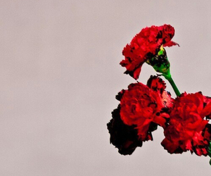 john legend, flowers, and music image