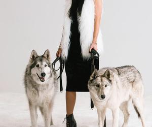 kylie jenner, jenner, and dog image