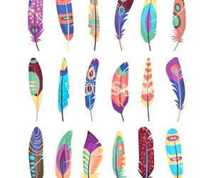 feather, animal, and background image