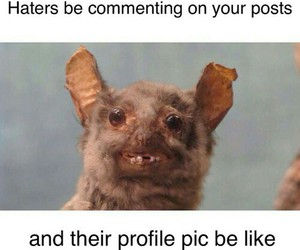 funny, haters, and true image