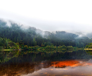 calm, fog, and forest image