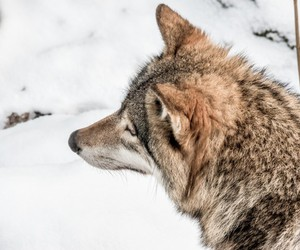 nature, animal, and snow image