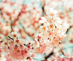 flowers, pretty, and pink image