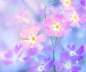 flowers, background, and nature image