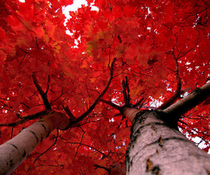 live, nature, and red image