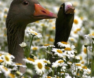 birds, flowers, and geese image