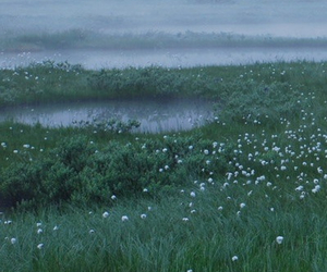 flowers, fog, and foggy image