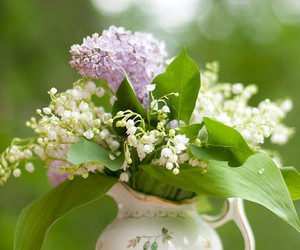 flowers and lily of the valley image