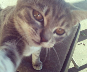 chaton, cool, and selfie? image
