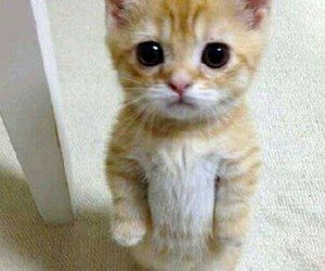 animal, cute, and kitty image