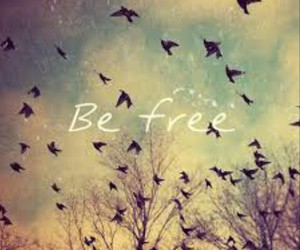 be, free, and birds image