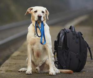 animals, backpack, and dog image